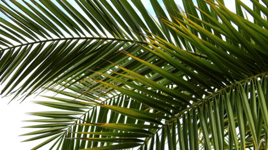 Lezingen op Palmzondag